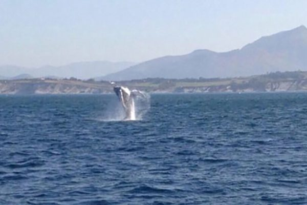 Camping Eskualduna : Baleine