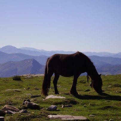 Camping Eskualduna : paysage de montagne avec un cheval